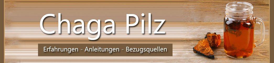 Chaga Pilz (Inonotus obliquus)